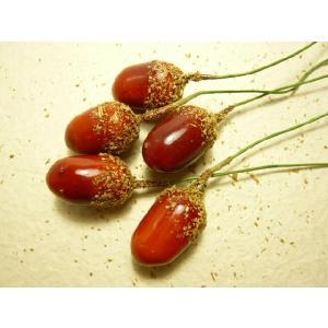 実物 フルーツ どんぐり大(2本または2粒付き)|familiamia