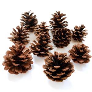 松かさ アソート 3〜6cm(大袋50個入)24207-000 松ぼっくり クリスマス 天然素材|familiamia