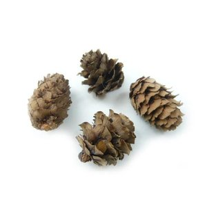 カラマツ 1.5〜3.5cm(大袋100個入) 唐松 クリスマスの実物 天然素材 familiamia