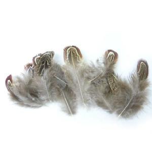 羽 パーツ 雉 アーモンド(背毛)(10枚)(ナチュラル)1枚5〜9cm #132 羽 パーツ根 フェザー 手芸材料 パーツ コサージュやアクセサリーに|familiamia