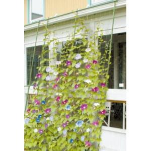 第一ビニール 緑のカーテン3m伸縮 ワイド1800 family-tools