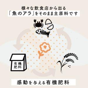 米 10kg コシヒカリ お米 新潟産こしひか...の詳細画像4