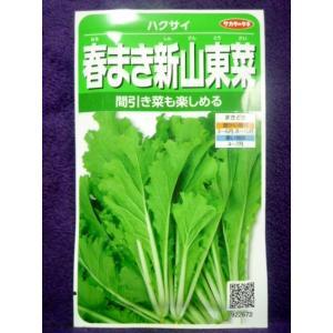★種子★ 春まき新山東菜 ハクサイ V サカタのタネ 20.10 (ゆうパケット便可能)