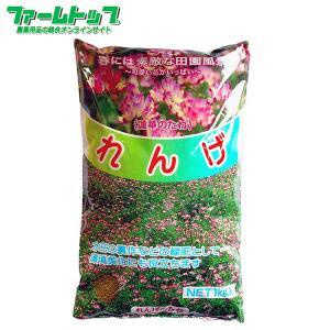 れんげの種 花の種 種子 レンゲ草 レンゲの種  花の種  1kg【景観用緑肥】