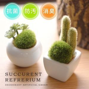 小さな多肉植物やサボテンやコケを寄せ植えした、キュートなグリーン。飾っておくだけで空間の抗菌、防汚、...