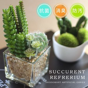 小さな多肉植物やサボテンやコケを寄せ植えした、キュートなグリーンです。飾っておくだけで空間の抗菌、防...