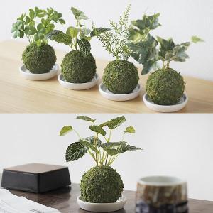 Wa Bonsai・和盆栽 消臭アーティフィシ...の詳細画像5
