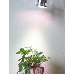 SPLamp-5w 観賞用植物育成LEDライト E26 小型スポットライト 水耕栽培 室内栽培 一般照明 植物育成用660nmLED使用 白|felicevoice-store