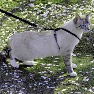 PetSafe ペットセーフ ペットグッズ 猫用品 首輪・ハーネス・リード ハーネス・胴輪 Come With Me Kitty Harness fermart-hobby