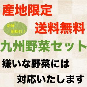 野菜セットS 8品 産地直送 送料無料 鹿児島県産 宮崎県産 美味しい旬の新鮮野菜の詰め合わせセット|fermier|03