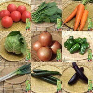 野菜セット 12品 鹿児島県 宮崎県産 送料無料|fermier|02