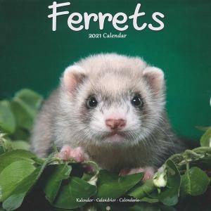 フェレット カレンダー  KP(キンペックス) 2020 フェレットカレンダー カレンダー2020 壁掛け 雑貨 グッズ 写真 かわいい 小動物 アニマル 月めくり|ferretwd