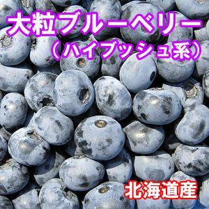 【令和3年収穫】北海道産 大粒ブルーベリー(冷凍)2Lサイズ500g×2個 fgkami