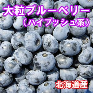 【令和3年収穫】北海道産 ブルーベリー(冷凍)Lサイズ500g×2個 fgkami