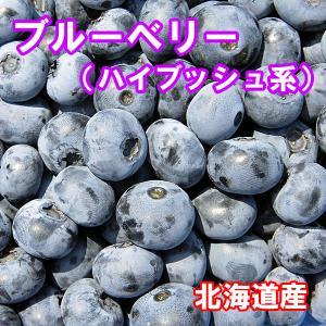 北海道産 ブルーベリー(冷凍)業務用10kg1箱 fgkami