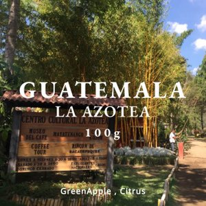 グアテマラ コーヒー豆 アンティグア アゾテア農園 100g 自家焙煎 スペシャルティコーヒー|袋|fifteencoffee
