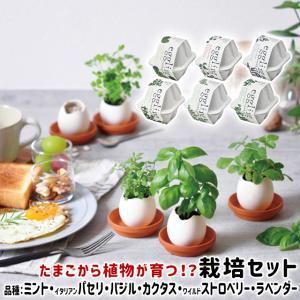 聖新陶芸 eggling eco friendly エッグリング エコフレンドリー EG48 ミント...