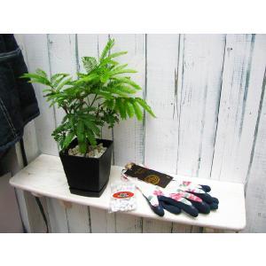 送料無料 エバーフレッシュ 黒い鉢入り ルミナスグローブ(ローズ柄) IB肥料(小袋) 母の日ギフト3点セット|finegarden