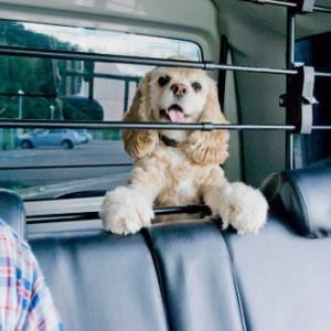 犬用ドライブ用品 Solvit カーバリアー|five-1