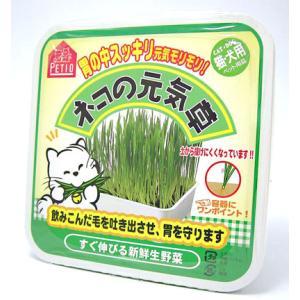 ネコの元気草 容器付き 猫・犬用(ペティオ) 毛玉対策 サプリメント|five-1
