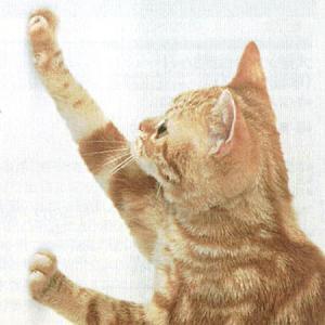 ペット ツメ傷保護シート・吸着タイプ 46x90cm グレー 猫用爪とぎ防止用品|five-1