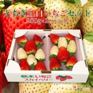 いちご王国とちぎ 紅白苺セット 280g×2パック 栃木県産品 鹿沼市