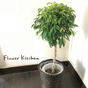 ベンジャミンL7号 観葉植物 送料無料 グリーン 即日発送 fkjiyugaoka