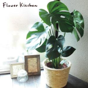 観葉植物 モンステラ + 丸バナナカゴ 白色 fkjiyugaoka