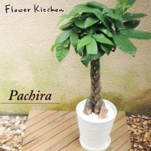 パキラ 観葉植物 パキラ の鉢植えM 7号鉢 白セラート鉢 7号鉢 白砂利入り 即日発送のグリーンギフト|fkjiyugaoka
