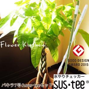 観葉植物 パキラ ねじり仕立て7号 おまかせカゴ付き  + 選べるカラー サスティーL|fkjiyugaoka