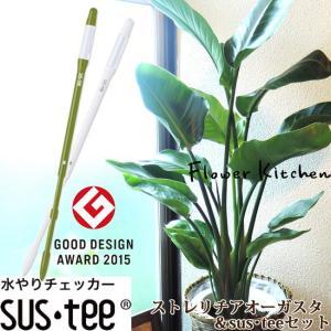 観葉植物 ストレリチアオーガスタ7号  + 選べるカラー サスティーL fkjiyugaoka