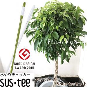 観葉植物 ベンジャミン7号 + 選べるカラー サスティーL fkjiyugaoka