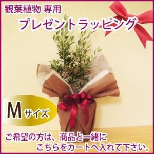 観葉植物・花鉢 ラッピング Mサイズ 商品と一緒にカートへお入れ下さい|fkjiyugaoka