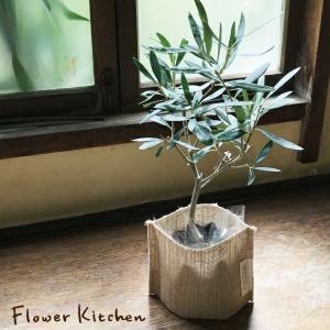 観葉植物 オリーブの木 と麻袋のナチュラルなグリーンギフト   即日発送|fkjiyugaoka