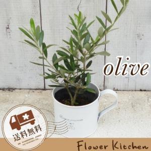 オリーブの木 × ブリキカップ  即日発送 グリーンギフト