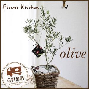 観葉植物 オリーブの木 5号Sサイズ 即日発送のグリーンギフト|fkjiyugaoka