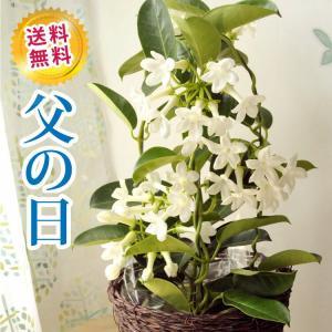 あすつく \遅れてごめんね/ 父の日 2021 プレゼント ジャスミン花鉢 育てて楽しい 鉢植え ギフト FKPP|fkjiyugaoka