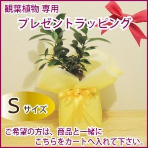 観葉植物・花鉢 ラッピング Sサイズ 商品と一緒にカートへお入れ下さい|fkjiyugaoka