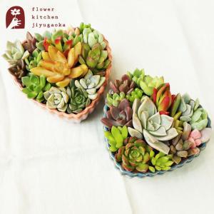 多肉植物 キャンディーハート2個セット キュートな 寄せ植え ギフト|fkjiyugaoka