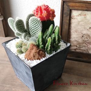 ■商品サイズ  ■商品サイズ…サボテンの寄せ植えサファリ 直 径:15cm 高 さ:10-13cm ...
