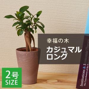 ガジュマル / 観葉植物2号ロング...
