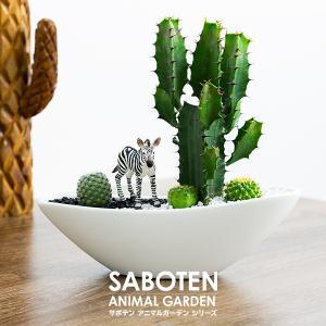 観葉植物 サボテン 寄せ植え  ドイツ製フィギュアメーカー「シュライヒ」の動物フィギュアを乗せた、イ...