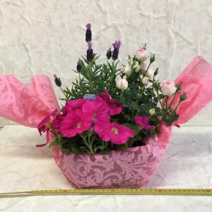 ミニバラの寄せ鉢 キャンディー|flower-8729