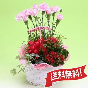 鉢花・観葉植物の寄せかご|flower-c2