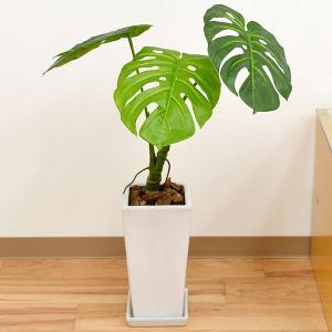 人工観葉植物 モンステラ株立ち スクエア陶器鉢 光触媒加工