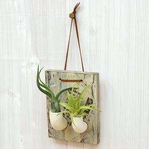 エアープランツ(チランジア) 壁掛け木製パネル陶器パイプ付き2