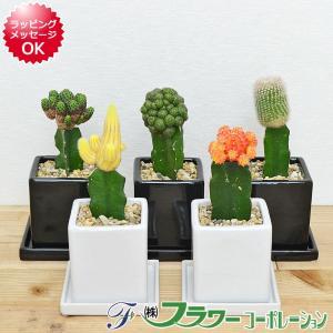 【商品サイズ】 商品全体の高さ: 約20cm - 25cm 前後 鉢サイズ:高さ 約10.5cm 幅...