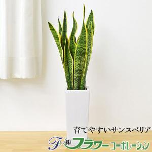 観葉植物 サンスベリア おしゃれ お祝い...