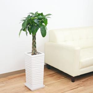 観葉植物 編みこみパキラ おしゃれ お祝い 7号 ウェーブスクエアポール陶器鉢植え