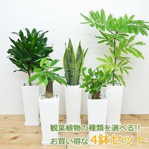 観葉植物 4号スクエア陶器鉢植え 4鉢セット